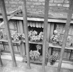 Nigel Henderson 'Photograph of a view through a window', [c 1951–1952] © Nigel Henderson Estate