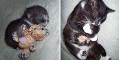 Não são só as crianças que gostam de ter um ursinho de pelúcia ou outro brinquedo favorito. Muitas v...