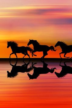 Horses Galloping During Sunset