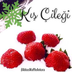 Yazdan kalma tazelikleriyle, karları eriten mis kokulu Anamur çilekleri... Ankara, Waffles, Strawberry, Fruit, Instagram Posts, Waffle, Strawberry Fruit, Strawberries, Strawberry Plant
