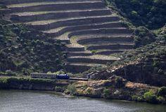 O comboio da Google na Linha do Douro - JN