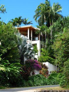 Tropical garden Home - Tropical garden, Port Douglas Tropical Garden Design, Tropical Landscaping, Tropical Plants, Garden Landscaping, Landscaping Ideas, Succulent Gardening, Organic Gardening, Balcony Gardening, Landscape Design Plans