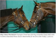 Untapable meets Frankel for their first date
