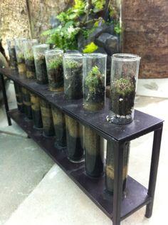 1000 Images About Terrarium On Pinterest Mini Terrarium Air Plants And Chemistry