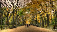 Fall in Central Park is grand!