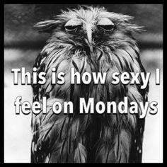 Monday jokes Funny Humor Bird jokes