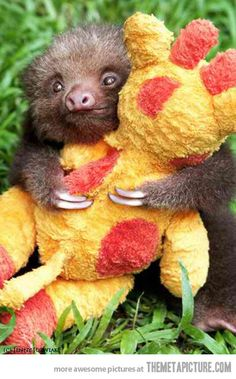 Baby sloth hugging his favorite stuffed animal