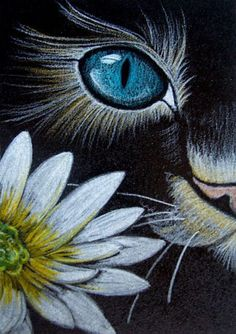 """""""Cat Behind Marguerite Flower"""" par Cyra R. Cancel """"Cat Behind Marguerite Flower"""" von Cyra R. Abbrechen This image has get. Cat Drawing, Painting & Drawing, Animal Paintings, Animal Drawings, Pastel Art, Chalk Art, Rock Art, Painting Inspiration, Art Projects"""