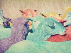 No estás soñando: las ovejas de colores existen