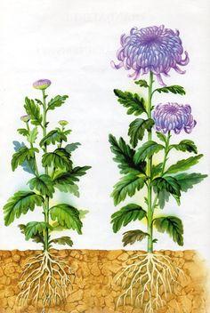 Spring Flowers, Autumn Flowers, Autumn Activities, Crafts, Einstein, Angel, Science, Decor, Plant