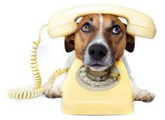 5 #Fun #Facts About the #Telephone You Never Knew // #ElevateYourBusiness #SFW #Phone #History
