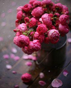 The Visual Vamp — Flora Love Rose Flower, Beautiful Rose Flowers, Beautiful Flower Arrangements, Flowers Nature, Fresh Flowers, Pink Flowers, Beautiful Flowers, Happy Birthday Flower, Flower Phone Wallpaper