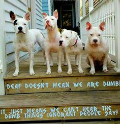 "Amen!! It said ""Deaf doesn't mean we are dumb. It just means we can't hear dumb things ignorant people say!"""