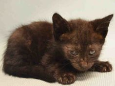 5 WEEKS OLD, RIGHT HIND LEG HAS PATCH OF RINGWORM - NEEDS FOSTER ASAP