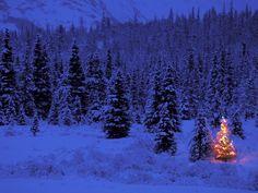 White Christmas~ YES please!