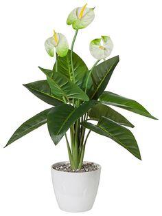 Artikeldetails:  Täuschend echte Anthurie, Bestehend aus drei Blüten und 10 Blättern, Höhe: 70 cm,  Material/Qualität:  Kunststoff, Topf aus Keramik,  ...