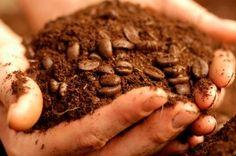 10 usos creativos para los restos del café