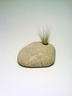 Engraved Rock Air Plant Holder Stone by DeerwoodCreekGifts on Etsy, $20.00