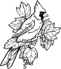 Cardinal : Rubber Art-Stamps : Decorative Rubber Stamps : The Stampin' Place Wood Burning Patterns, Wood Burning Art, Wood Burning Crafts, Bird Coloring Pages, Adult Coloring Pages, Coloring Books, Bird Drawings, Animal Drawings, Drawing Birds