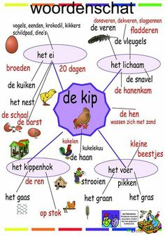 Woordkaart kip Dutch Phrases, Learn Dutch, Dutch Language, Creative Teaching, Vocabulary, Homeschool, Education, Learning, Spring