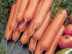 Carrot Seeds ★ SCARLET NANTES ★ Orange Interior with Sweet Taste ★ 100+ Seeds ★ Carrot Seeds, Orange Interior, Edible Garden, The 100, Vegetables, Sweet, Gardening, Food, Nantes