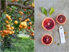 Citrus project by Cintamani, GreenMorning. Albedo, Fruits And Vegetables, Garden Inspiration, Food Photography, Nature, Orange, Green, Recipes, Yard