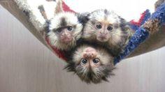 Exotic pet store [Pet Kingdom USA]