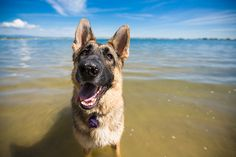 Sacramento Pet Photographer – Purple Collar Pet Photography » Blog