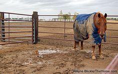 Mud Management 102: Paddock Footing | Smart Horse Keeping | TheHorse.com