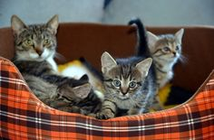 6 Important Things To Remember When Caring For Kittens