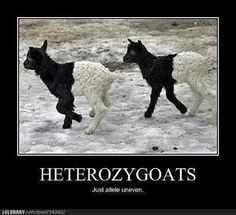 Hehehe Genetics humor. This means that that it is a hybrid gene! Ha! I learned this in science class today!!