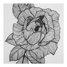 Wiggly wiggle lines #peony #peonies #flowers #peonytattoo #illustration #illustrator #drawing #sketch #sketchbook #pendrawing #pen #ink #art #artwork #contemporaryart #blackwork #linework #blacklines #linedrawing #tattoo #etsy