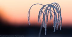 Frost! Lapland-themed nature art from Rovaniemi, Finland