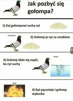 Wtf Funny, Funny Jokes, Funny Images, Funny Pictures, Polish Memes, Funny Mems, Dead Memes, Man Humor, Animal Memes