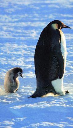 penguins....