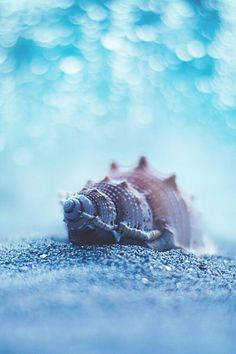 Shell Blues
