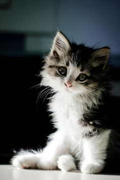 Why you so cute kitty? Am I don't know God just mades me that way. :)