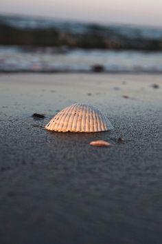 Seagull Beach, Hyannis