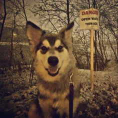 Snow excited!