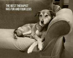 quotes about dogs - Google zoeken