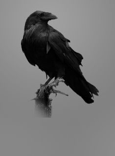 Lea and her blackbirds