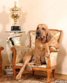 Luxury dogs - Estos perros están de lujo