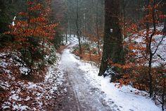Weg der Wege - Hermannsweg - zwischen Donoper Teich und Krebsteich