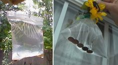 Com a chegada do calor chegam também as moscas e de certeza que ninguém gosta delas. As moscas são extremamente irritantes e nojentas. Além do mais que elas também podem transmitir doenças!  Felizmente, há um truque rápido para se livrar desses pequenos insectos.