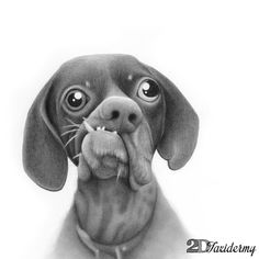 """Doug :: dubbed Britain's ugliest dog. Part of the series """"One of these things is not like the other"""" - hand drawn graphite pencil portraits celebrating differences elegantly"""