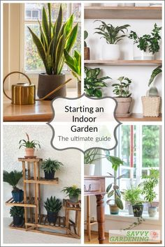 Learn how to create a beautiful indoor garden using the best houseplant for your light levels, humidity, and location. Turn your home into an oasis of green using these tips for growing an indoor garden. #indoorgardening #houseplants Different Plants, Types Of Plants, Air Plants, Indoor Plants, Container Gardening, Gardening Tips, Unusual Flowers, Hanging Pots, Plant Shelves