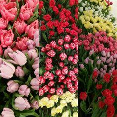 Vilken är din favoritfärg på tulpaner? #lillahultsblommor #tulpaner #vår2016