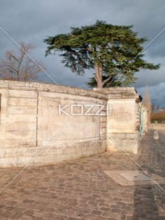 Classic Stone Wall - Marie-Antoinette's estate A stone wall, light brown and darkened in some areas from age in the dying sunlight, next to a dark, stormy sky and in front of a single, green tree, with barren ones spotting the picture.