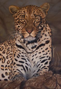 Leopard in oil on canvas