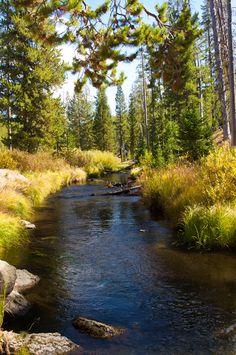 peaceful Montana back country gentle stream - near Yellowstone